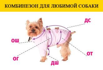 Комбинезон для любимой собаки