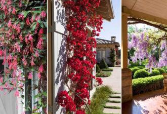 7 простых в выращивание быстрорастущих вьющихся растений. Декоративная красота в вашем саду