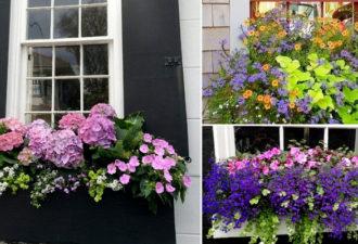 Чудесные мини-клумбы под окнами для любителей живых цветов